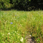 Wild Meadow Flowers Evesham Lodge
